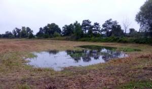 Derartigen Wasserstellen, wie hier am nördlichen Ortsende von Hohenau, ist derzeit erhöhte Aufmerksamkeit zu widmen!